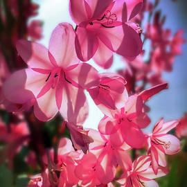 Peek-A-Boo Pink by Christina Ford