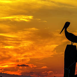 Pelican at Silver Lake Sunset Ocracoke Island by Greg Reed
