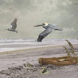 Pelican Beach by Spadecaller