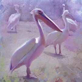 Pelican Briefly by Jeff Burgess