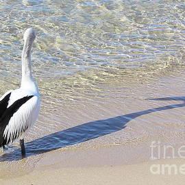 Pelican Shadow by Atiqur Rahman