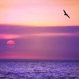 Pelican Sunset by Lynn Marie Sharp