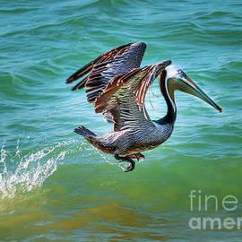 Pelican Take Off by Joseph Miko