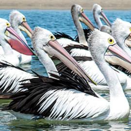 Pelicans Adrift by Az Jackson