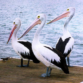 Pelicans Three by Susan Maxwell Schmidt