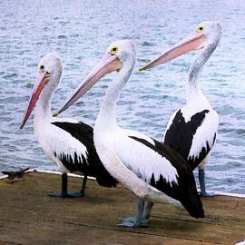 Pelicans Three by Susan Maxwell Schmidt