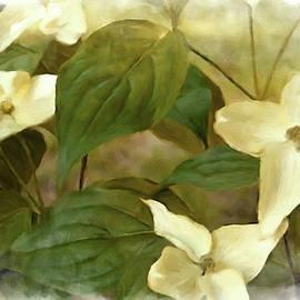 Pennsylvania White Dogwood by Susan Maxwell Schmidt