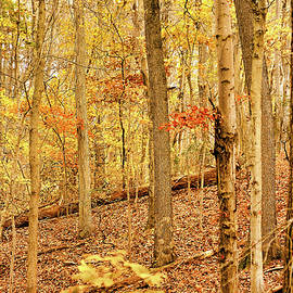 Pennsylvania Woodland by Susan Maxwell Schmidt
