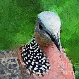 Pensive Pigeon