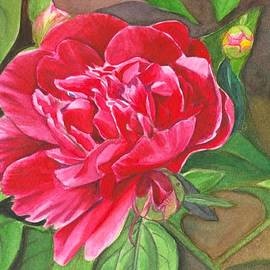 Peony in the garden by Swati Singh