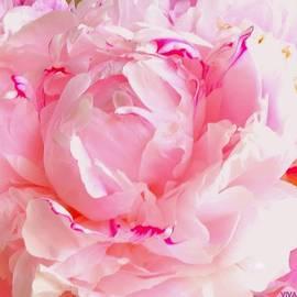 Peony Precious Pink by VIVA Anderson