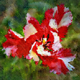 Peppermint Twist Square Abstract Tulip by Marilyn DeBlock