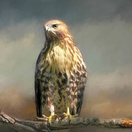 Perched and Waiting by Donna Kennedy