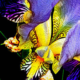 Peruvian Lily by Ali Bailey