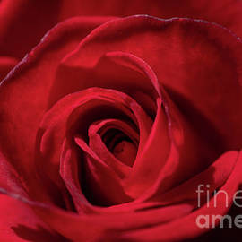 Petals of Red by Linda Howes