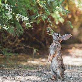 Peter Cottontail by Shawn Dechant