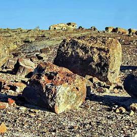 Petrified Forest, Arizona by Lyuba Filatova