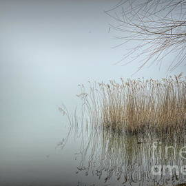 Phragmites Grass in Fog by Diana Mary Sharpton