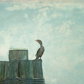 Pier percher by Sarina Cook