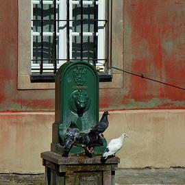 Pigeon Fountain by Ren Kuljovska