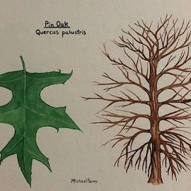 Pin Oak Tree ID W/ Border by Michael Panno
