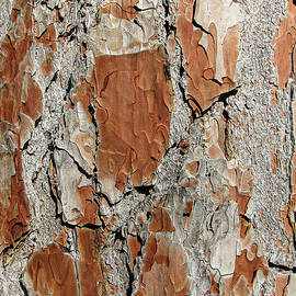 Pine Tree Bark by Deane Palmer