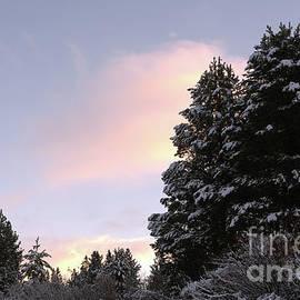 pine trees at sunrise, El Dorado National Forest, California, U. S. A. by PROMedias Obray