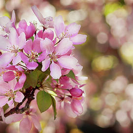 Pink Apple Blossoms by Elena Francis