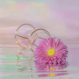 Pink Aster in Reflection by Sylvia Goldkranz