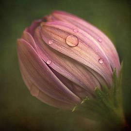 Pink by Barbara Corvino