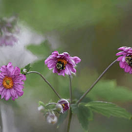 Pink Beauties  by Mary Lynn Giacomini