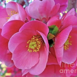 Pink Blossomed Branch by Jasna Dragun