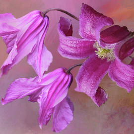 Pink Clematis 2 by Isabela and Skender Cocoli