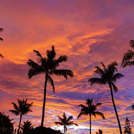 Pink Cloud Palms by Sean Davey