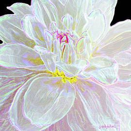 Pink Crystals Dahlia Flowers by Janie Easley Ballard