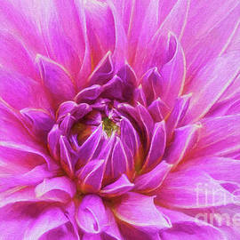 Pink Dahlia Dream by Sharon McConnell