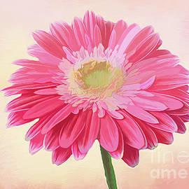 Pink Daisy by Lynn Bolt