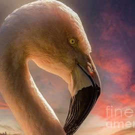 Pink Flamingo Portrait 3 by Mitch Shindelbower