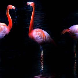 Pink Flamingos by Mark Andrew Thomas