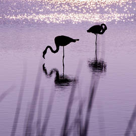 Pink flamingos silhouettes by Orelien Fly