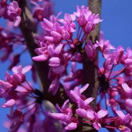 Pink Flowers, Blue Sky by Pat Turner