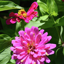 Pink Flowers in the Summertime by Robyn King