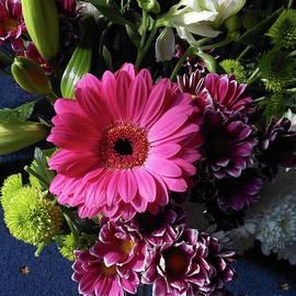 Star of the Show - Pink Gerbera Daisy by Kathryn Jones
