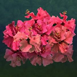 Pink Hibiscus Flowering Blooms Posy by Joan Stratton