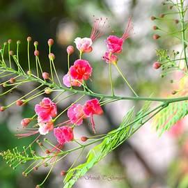 Pink inflorescence by Sonali Gangane