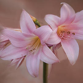 Pink Lady Elegance by Terry Davis
