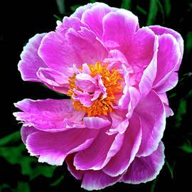 Pink by Matthew Lerman