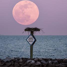 Pink Moon 2021 1 by Robert Fawcett