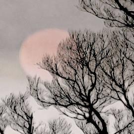 Pink Moon by Susan Maxwell Schmidt