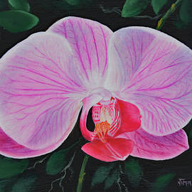 Pink Orchid by Jimmie Bartlett